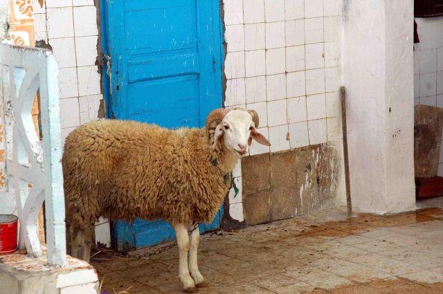 Zdj�cia: sousse, w oczekiwaniu na koniec Ramadanu, TUNEZJA