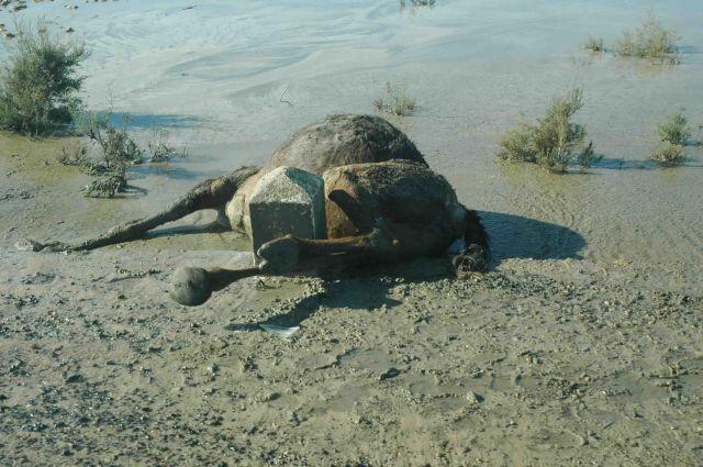 Zdjęcia: gdzieś pod granicą algierska, wypadki na pustyni też się zdarzają :), TUNEZJA