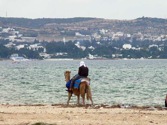Zdjęcia: Hammamet, Tubylec na swoim wielbladzie, TUNEZJA
