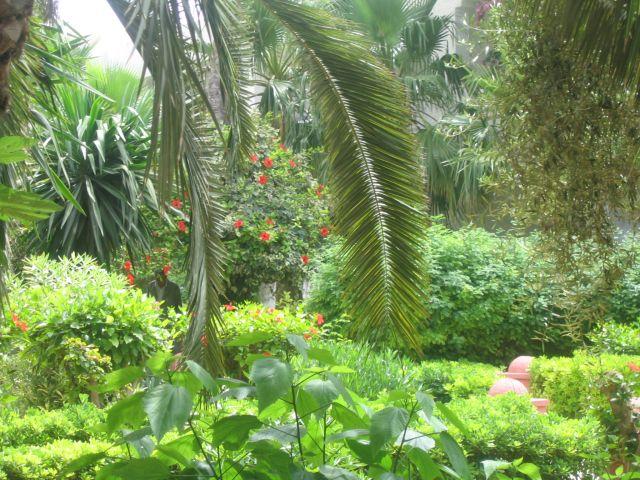 Zdjęcia: tunezja, ogród, TUNEZJA