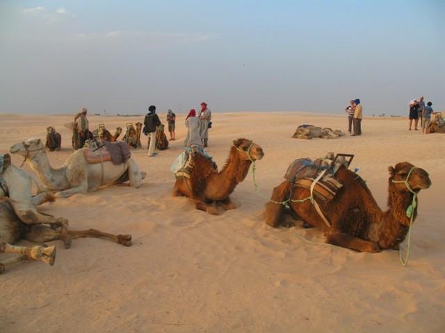 Zdjęcia: Sahara, Sahara, Odpoczynek na Saharze, TUNEZJA