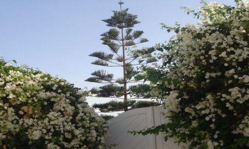 Zdjęcie TUNEZJA / Wsch. Tunezja / Port El - Kantaoui / Bungerwilia :)