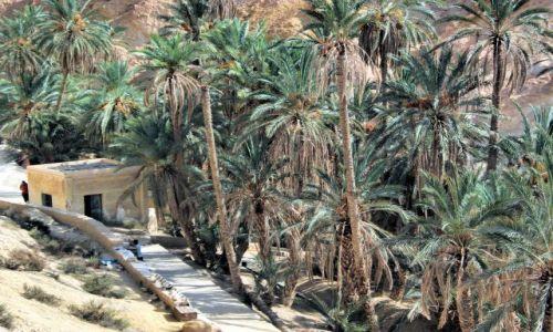 Zdjęcie TUNEZJA / środkowo - zachodnia Tunezja / Chebika / oaza z gajem palmowym w Górach Atlas