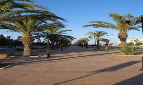 Zdjęcie TUNEZJA / Hammamet / Yasmin / Aleja w Hammamet