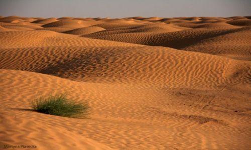 Zdjęcie TUNEZJA / Południowa Tunezja / Ksar Ghilane / Sahara