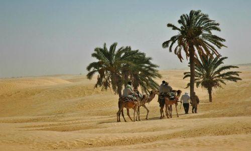 Zdjecie TUNEZJA / Sahara / gdzie� na pustyni / ...
