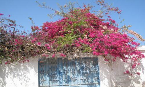 Zdjęcie TUNEZJA / Wybrzeże / Okolice Tunisu / Kwieciście