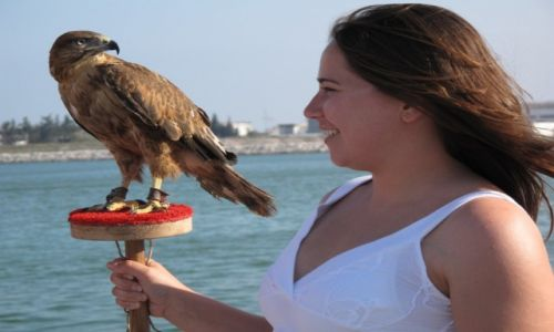 Zdjęcie TUNEZJA / Okolice Tunisu / Okolice Tunisu / Wszytsko dla turystów