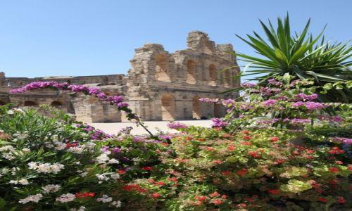 Zdjęcie TUNEZJA /  Sahel Tunezyjski / El Jem / Widok z ogrodu