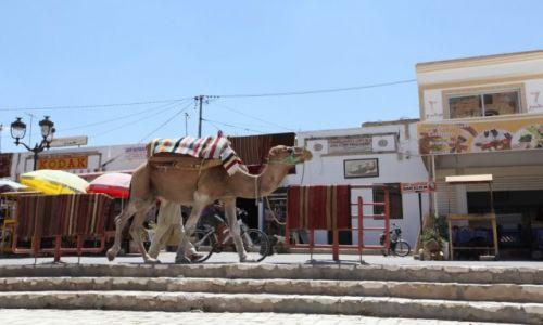 Zdjęcie TUNEZJA / Sahel Tunezyjski / El Jem / Wielbłąd