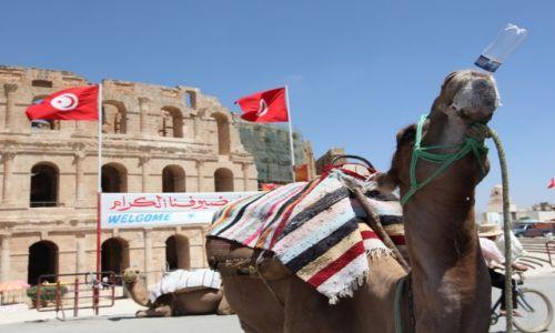 Zdjecie TUNEZJA / Sahel Tunezyjski / El Jem / Pojenie wielbłąda