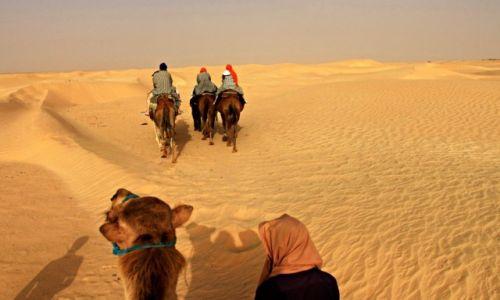 Zdjecie TUNEZJA / południe Tunezji / Pustynia / Wyprawa na pustynię w Tunezji