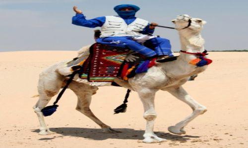Zdjęcie TUNEZJA / Centralna Tunezja / Douz / Wielbłąd wyścigowy