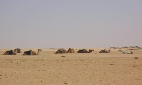 Zdjecie TUNEZJA / Douz / Douz / Sahara