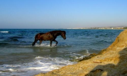 Zdjęcie TUNEZJA / Północ / Nabul / Popołudniowa kąpiel