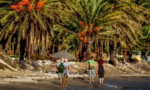 Zdjecie TUNEZJA / Susa / Susa / spacer pod palmami