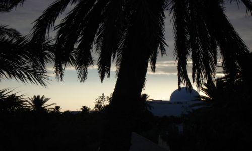 Zdjęcie TUNEZJA / Djerba / Djerba / ładne zdjęcie