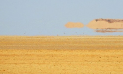 Zdjecie TUNEZJA / Tozeur / pustynia / Fatamorgana