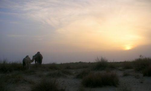 Zdjęcie TUNEZJA / brak / PUSTYNIA SAHARA / wieczorny spacer