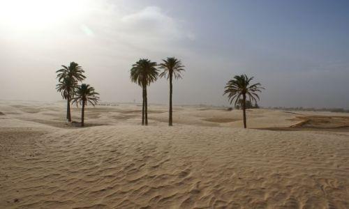 Zdjęcie TUNEZJA / sahara / douz / piaski pustyni