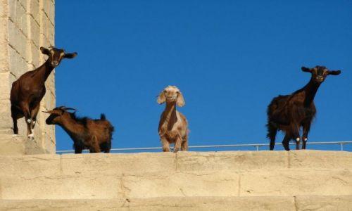 Zdjęcie TUNEZJA / brak / Monastir / Statyści