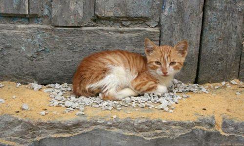 Zdjecie TUNEZJA / Medina / Sousse / Kot