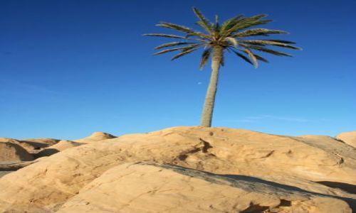 Zdjęcie TUNEZJA / brak / Sahara / Palma