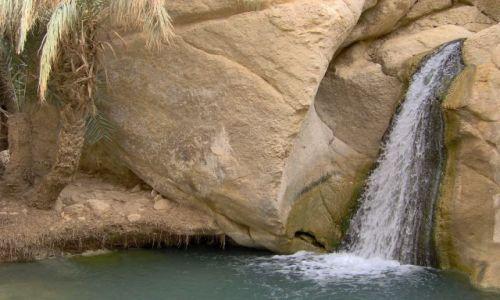 Zdjęcie TUNEZJA / Tunezja Południowa / Oaza Chebika / w oazie