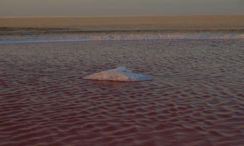 Zdjęcie TUNEZJA / Chott el Jerid / pobocze / słony widoczek