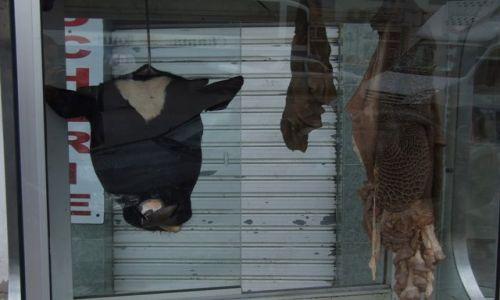 Zdjecie TUNEZJA / Sousse / Sklep mięsny / Święta Krowa in