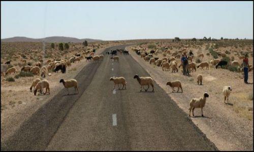Zdjęcie TUNEZJA / Duz / brak / drogowe niespodzianki