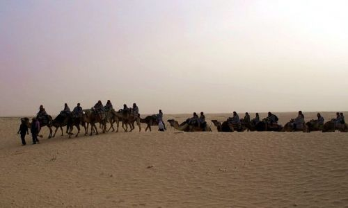 TUNEZJA / Południowo-zachodnia Tunezja / Douz / Karawana wielbłądów