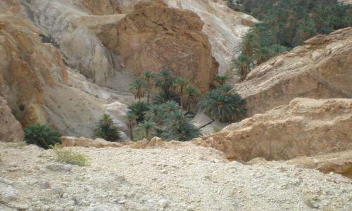 Zdjęcie TUNEZJA / Tamerza / tunezja / oaza