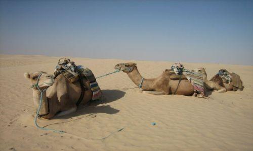 Zdjęcie TUNEZJA / Sahara / Douz / OKRĘTY PUSTYNI