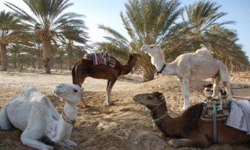 Zdjecie TUNEZJA / niedaleko sahary / oaza / tunezja