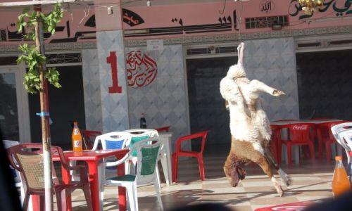 Zdjecie TUNEZJA / srodkowa tunezjia / ..... / biedna owieczka