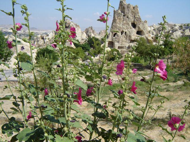 Zdjęcia: Kapadocja, Kapadocja, Kwitnąca Kapadocja, TURCJA