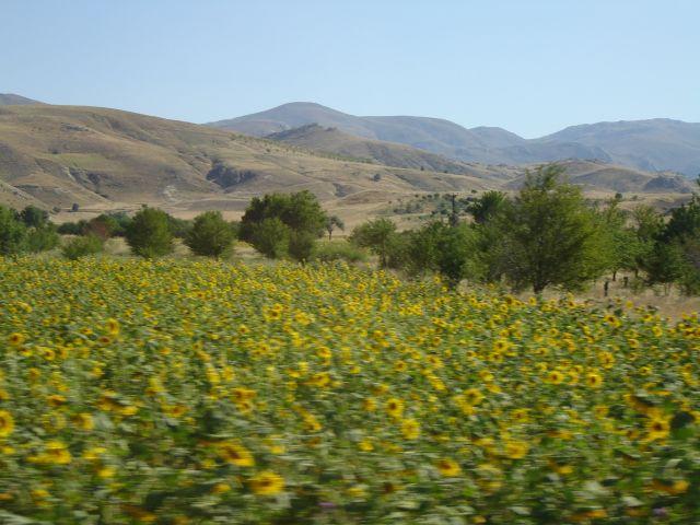 Zdjęcia: Turcja środkowa, Turcja-słońce i słoneczniki, TURCJA