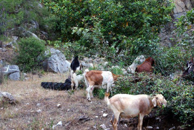 Zdjęcia:   , Wszędzie, Kozice, TURCJA