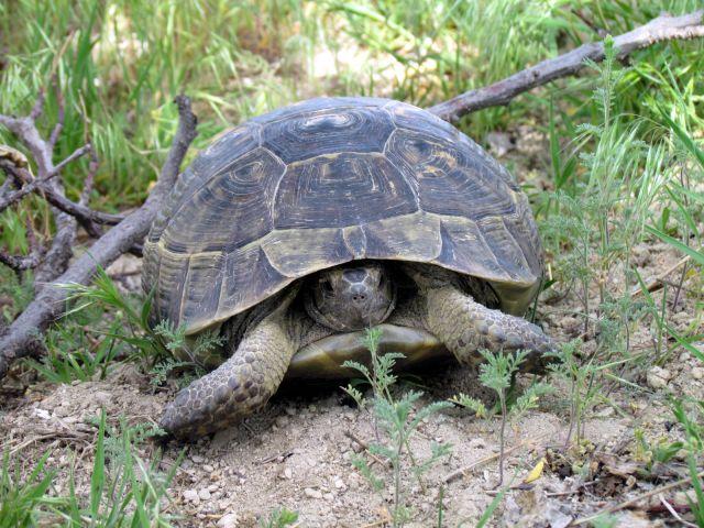 Zdjęcia: Urgup, Kapadocja, Żółw, TURCJA