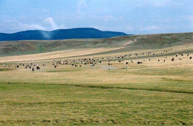 Zdjęcia: Okolice Erzurum, Wschodnia Turcja, Pastwiska , TURCJA