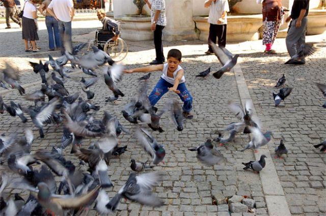 Zdjęcia: Istanbuł, Tureckie gołębie, TURCJA