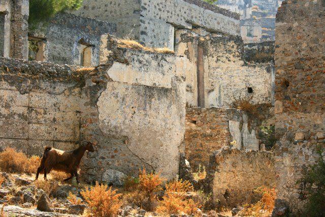 Zdjęcia: Kayakoy, Antalia, Koza w Mieście Duchów, TURCJA