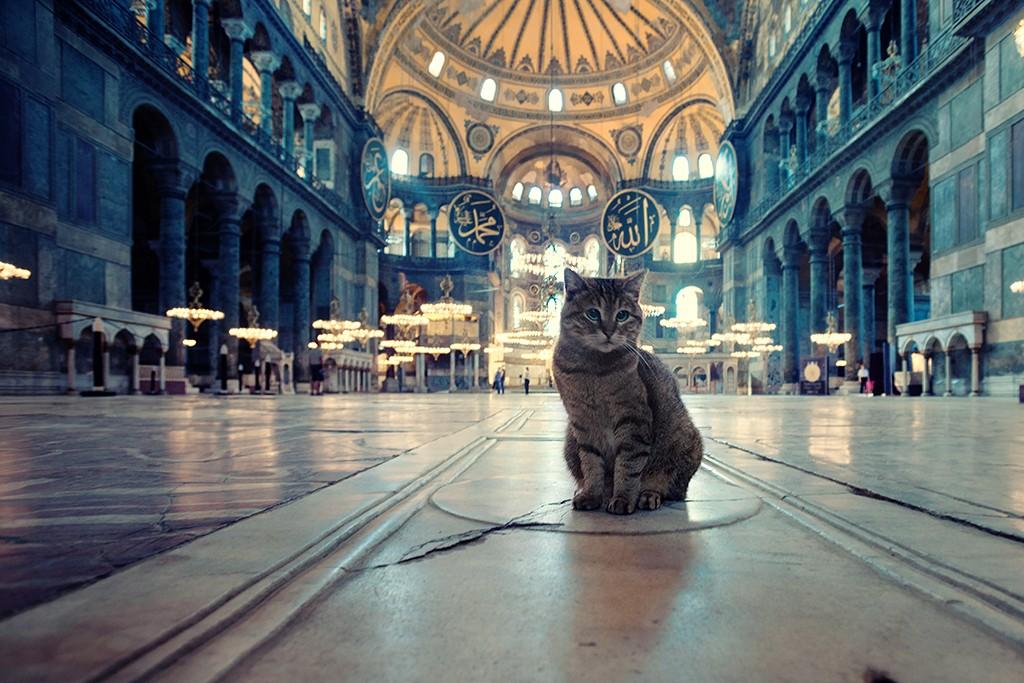 Zdjęcia: Hagia Sophia, Stambul, straznik, TURCJA