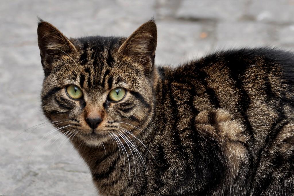 Zdjęcia: Istambuł, Istambuł, Istambuł, kocie życie:), TURCJA