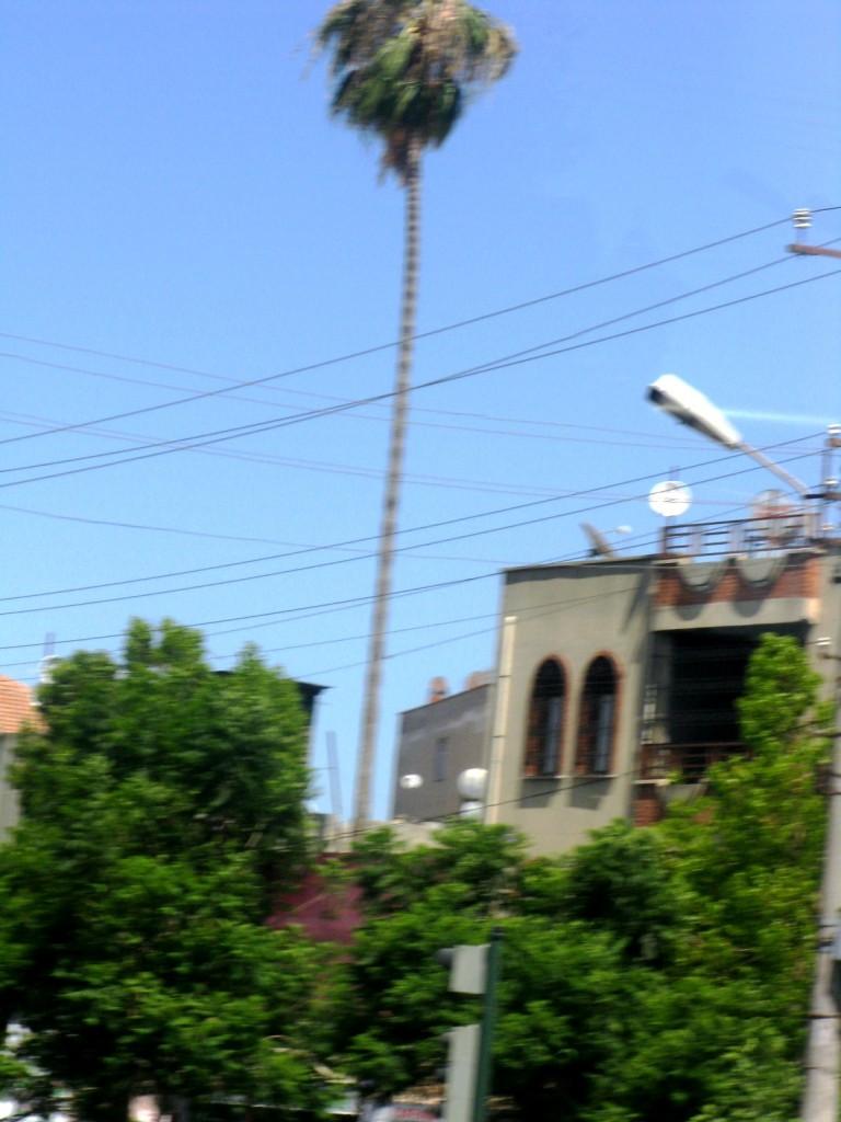 Zdjęcia: okolice Alanyi, Ale wyrosło....., TURCJA