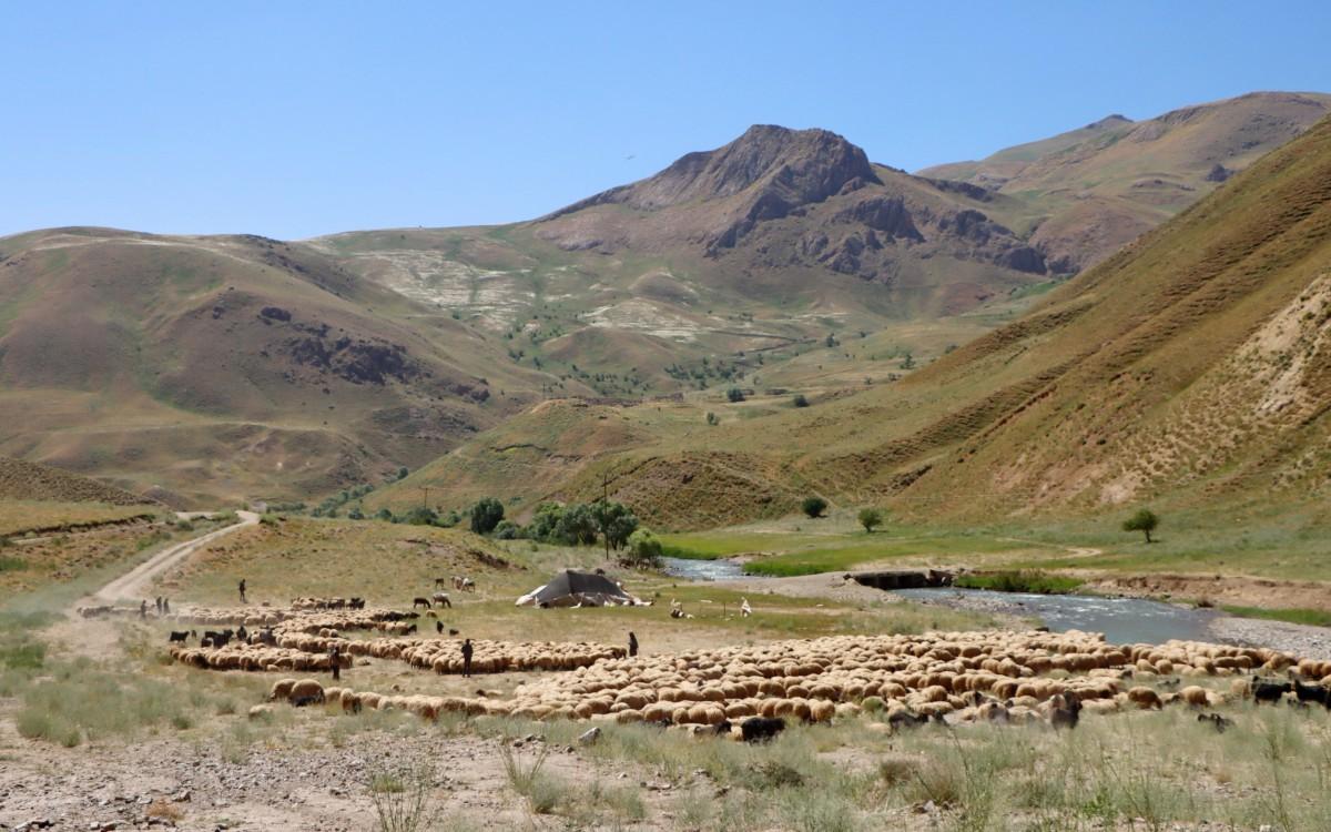 Zdjęcia: Baskale, wschodnia Anatolia, Wypas owiec w górskiej dolinie w Kurdystanie, TURCJA