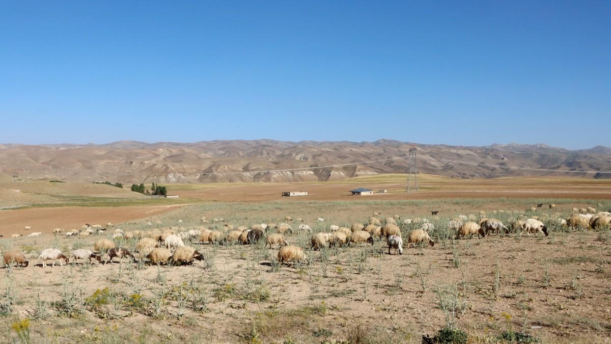 Zdjęcia: Yanal, wschodnia Anatolia, Przy granicy z Iranem, TURCJA
