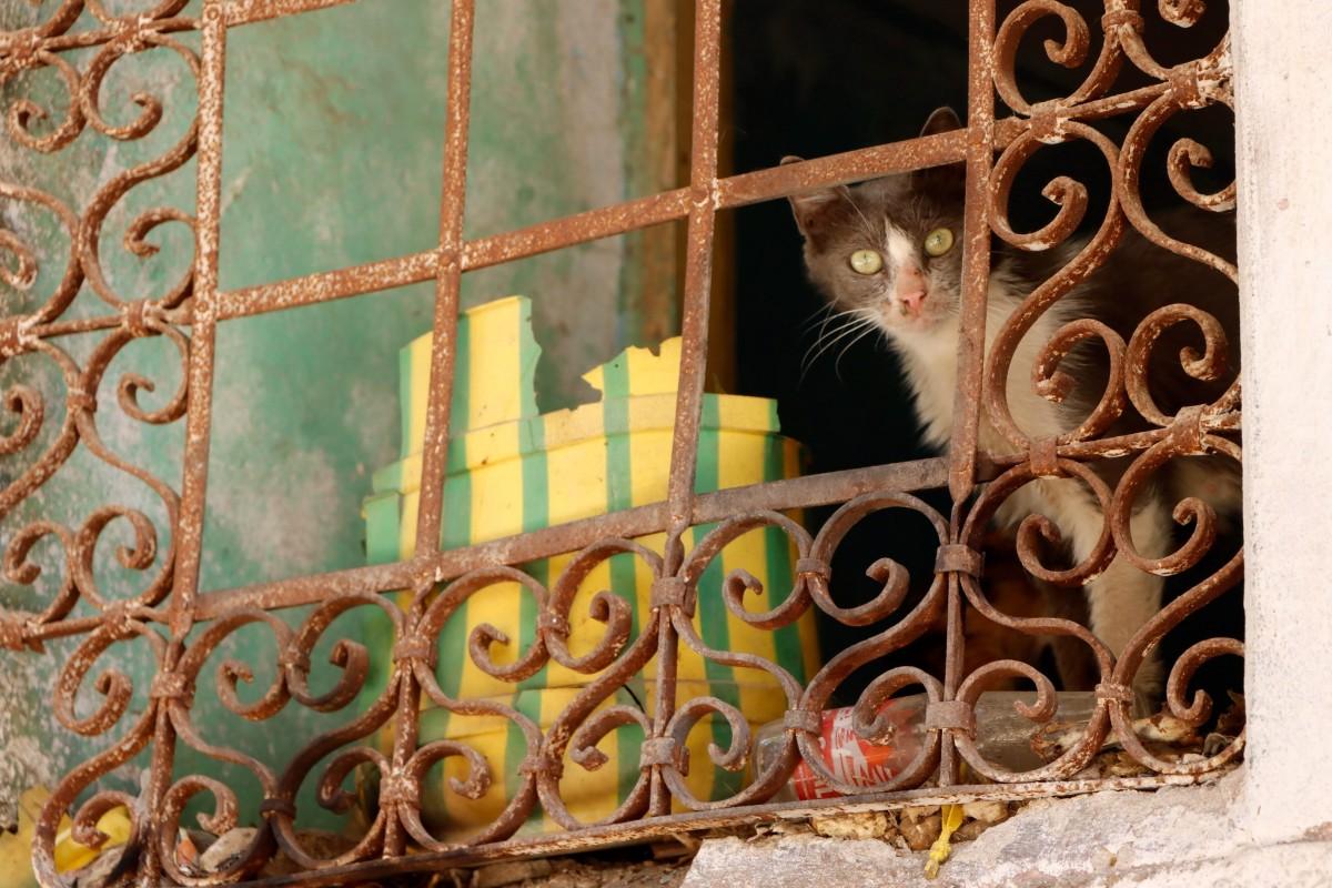 Zdjęcia: Diyarbakir, płd.-wsch. Anatolia, Obserwator, TURCJA