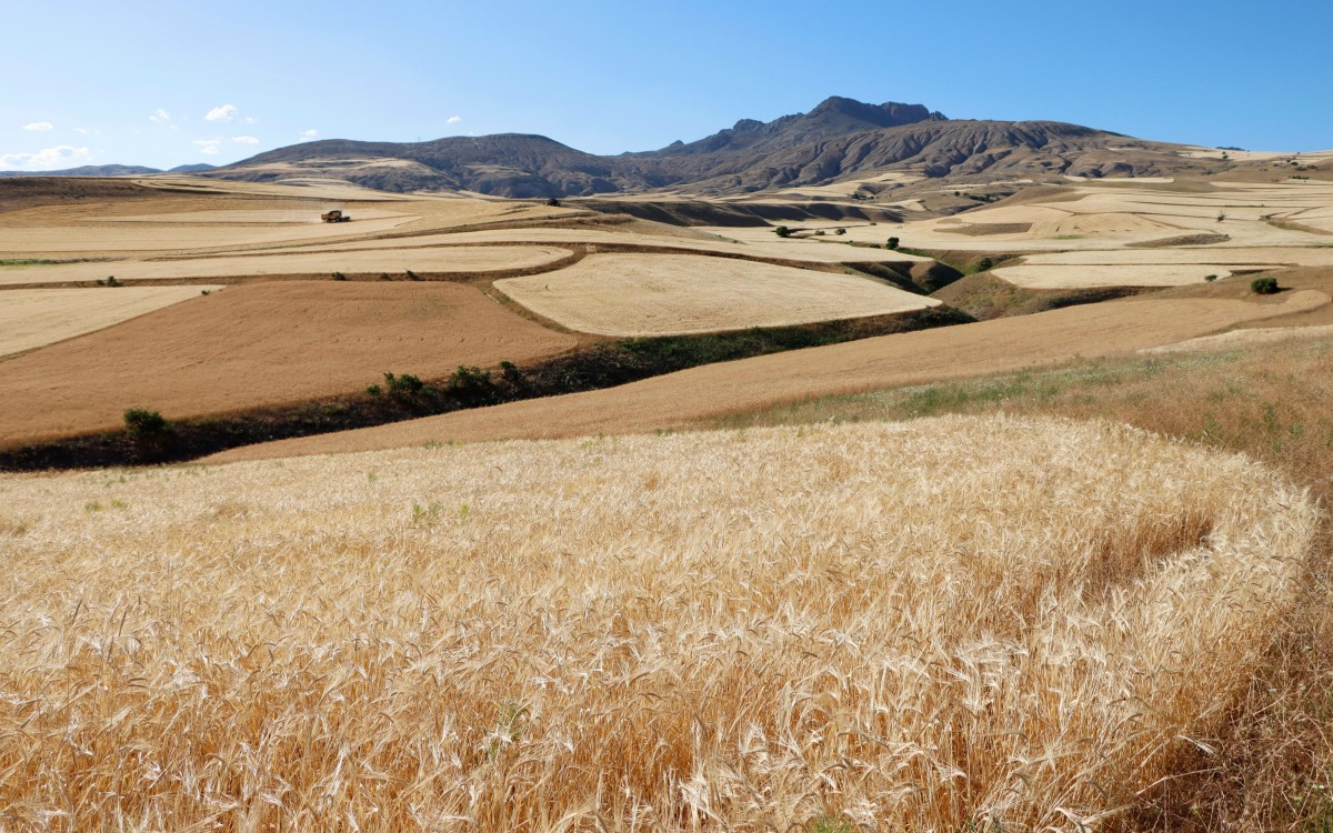 Zdjęcia: środkowa Anatolia, Żniwa, TURCJA